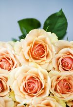 A bunch of roses for the NetFlorist review